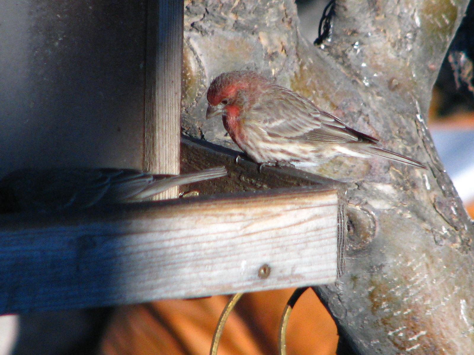 winter bird feeding an alberta guide