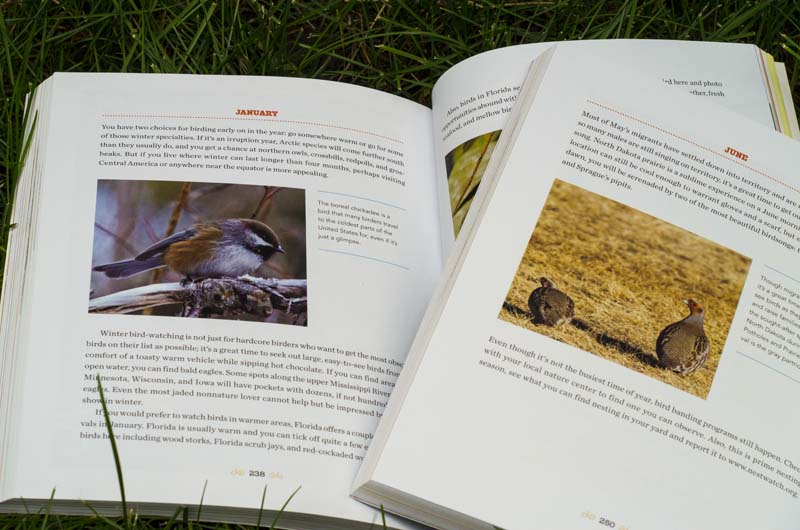 My two entries in 1001 Secrets Every Birder Should Know