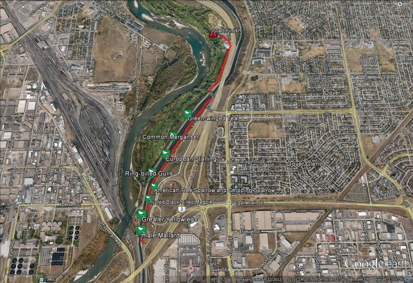 irrigation canal Archives - Birds Calgary