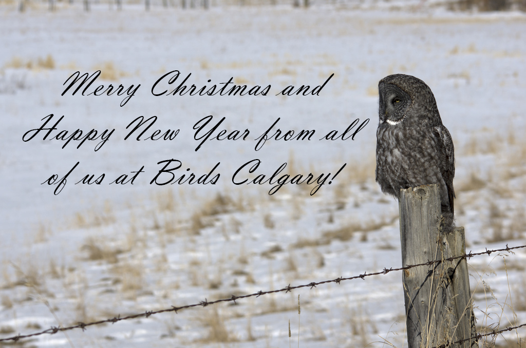 Merry Christmas from Birds Calgary