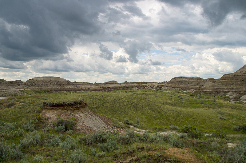 Dinosaur Provincial Park north of Brooks, Alberta June 2014