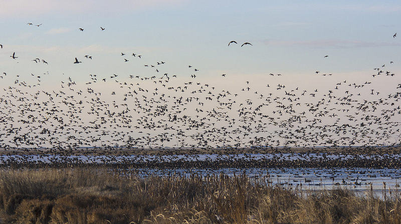 migration at Frank Lake