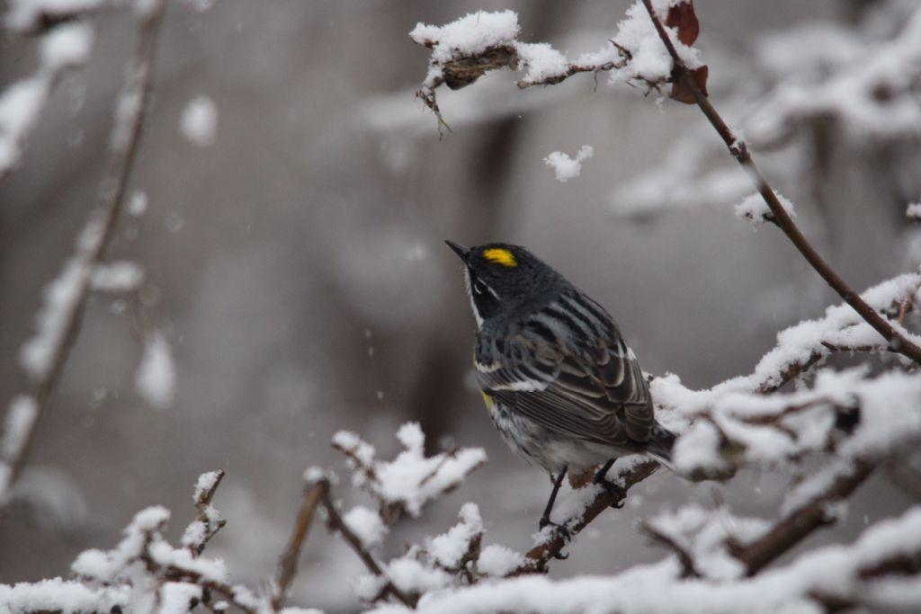 Sunday warbler 2