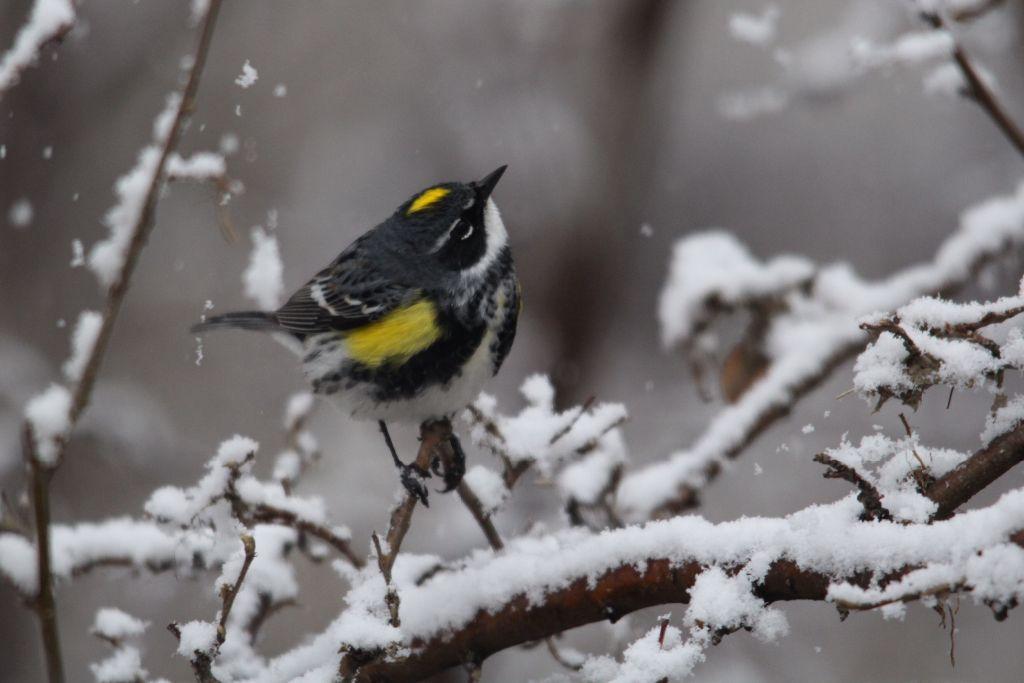 Sunday warbler