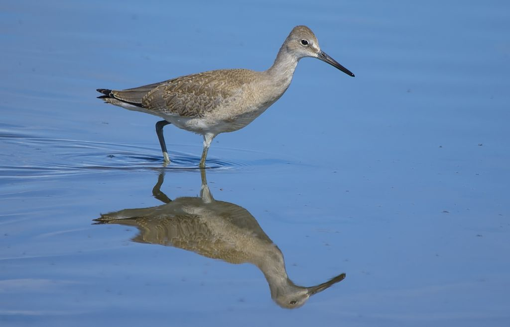 Willet Weed Lake August 30, 2014