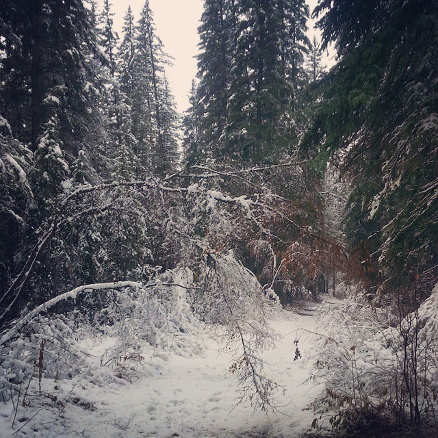 A snowy Sunday in Griffith Woods