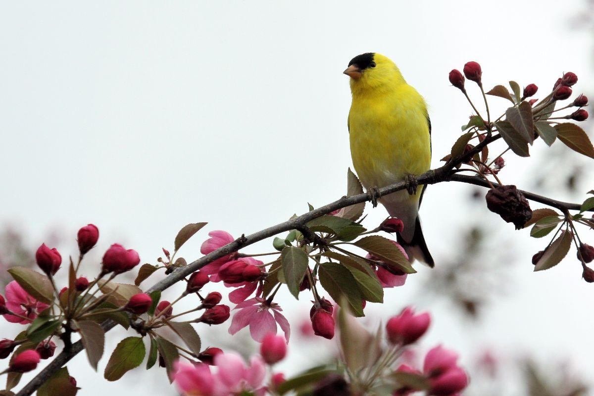 backyard birds archives birds calgary
