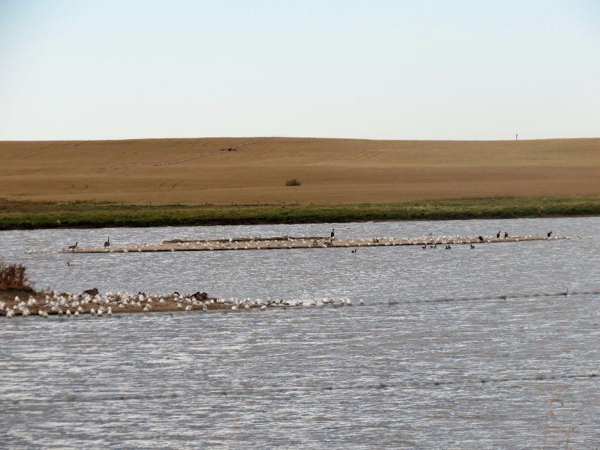 img_8793-cattleland-islands