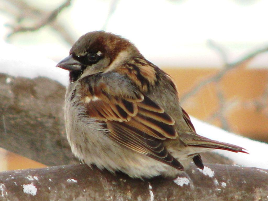 Getting Started with eBird - Birds Calgary